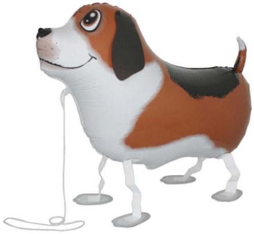 Petwalker hond